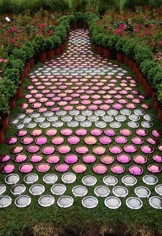 Orto Rosé